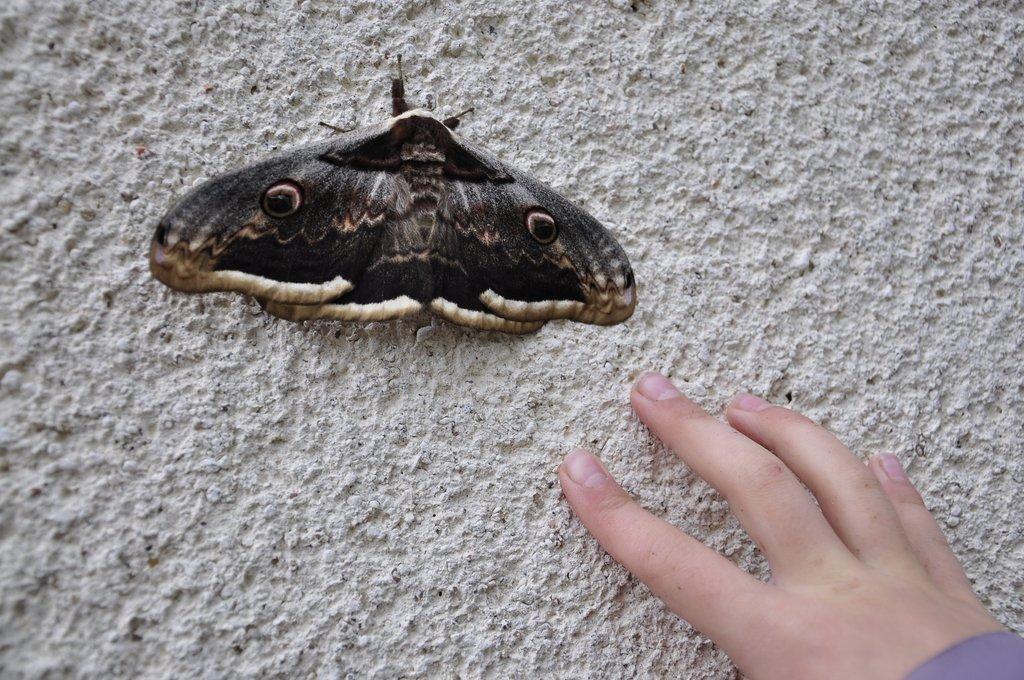 Un drôle de papillon