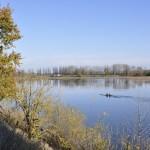 Aviron sur la Loire